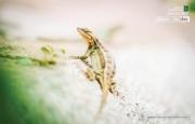 Lizard - the Hunter, by Joaquín Alonso Arellano Ramírez