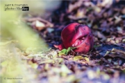 The Wonder Fruit, by Bawar Mohammad
