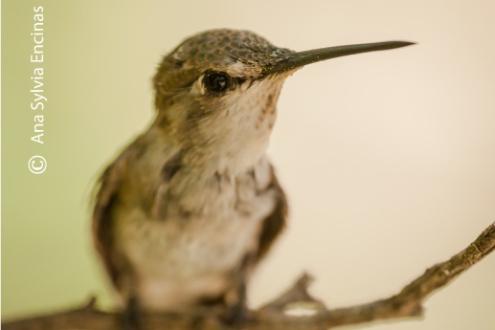Hummingbird's Eye, by Ana Sylvia Encinas