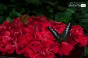 Beauty of Butterfly, by Tanmoy Saha