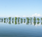 Line of Trees, by Ahmed Sabbir