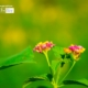 Just Some Wild Flowers, by Rezawanul Haque