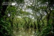 Deep Inside of Ratargul, by Tanmoy Saha