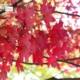Autumn, by Patricia Saraiva