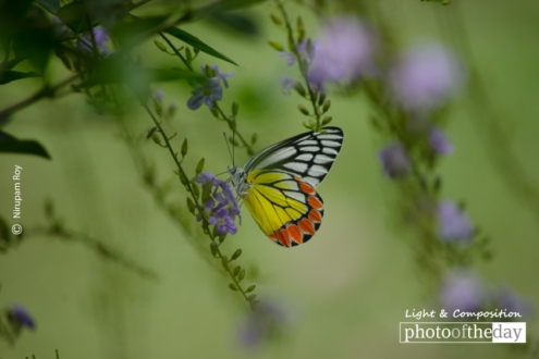 Color Splash, by Nirupam Roy
