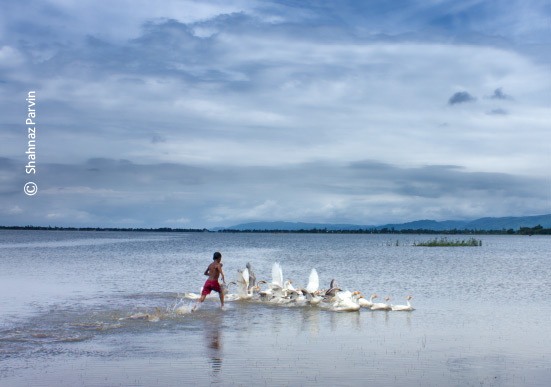 Chasing Geese, by Shahnaz Parvin