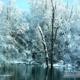 Snowy Pond, by Tisha Clinkenbeard
