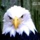 Eagle, by Tisha Clinkenbeard