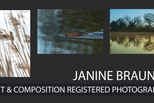 Janine Brauneis