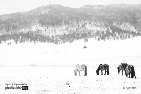 Mongolian High Country, by Shirren Lim