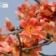 Sunshine Spring, by Shovan Acharyya