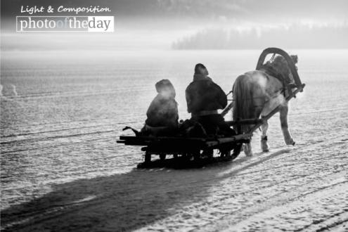 Horse Sleighing, by Shirren Lim