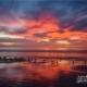 Birds, Sea, and the Fiery Sky, by Arindam Guptaray