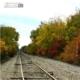 Fall Tracks, by Tisha Clinkenbeard