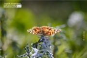 Butterfly Resting, by Des Brownlie