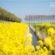Spring in Goeree, by Rob van der Waal
