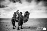 The Camel Polo Player, by Shirren Lim