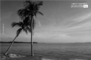 Coconut Trees, by Siew Bee Lim