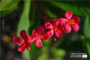 Little Red Flowers, by Siew Bee Lim