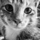 Cimin the Cat by Junita Haryati