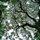 Veins of Green by Ryan Perris