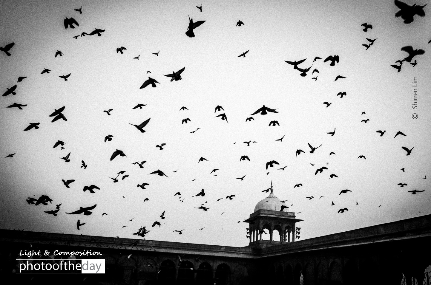 Birds by Shirren Lim