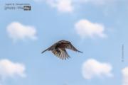 Fly High by Shubham Katiya