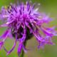 Wild Flowers by Kirsten Bruening