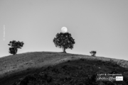 When the Moon is Near by Moslem Azimi