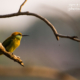 Green Bee-Eater and the Rays Of Sun by Sarthak Pattanaik