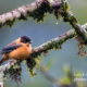 Lonely bird in the cold Himalayas by Sarthak Pattanaik