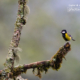 Green-Backed Tit And The Winter Morning by Sarthak Pattanaik