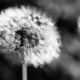 Some See a Weed by Kirsten Bruening