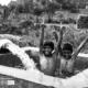 Bundles of Aqua by Swathi Nair