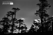 Black Trees by Ravikumar Jambunathan