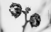 Winter Alien by Krystian Dobrzynski