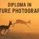 Diploma in Nature Photography