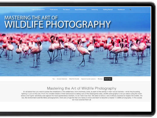 Mastering the Art of Wildlife Photography