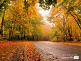 A World of Octobers by Anna Cicala