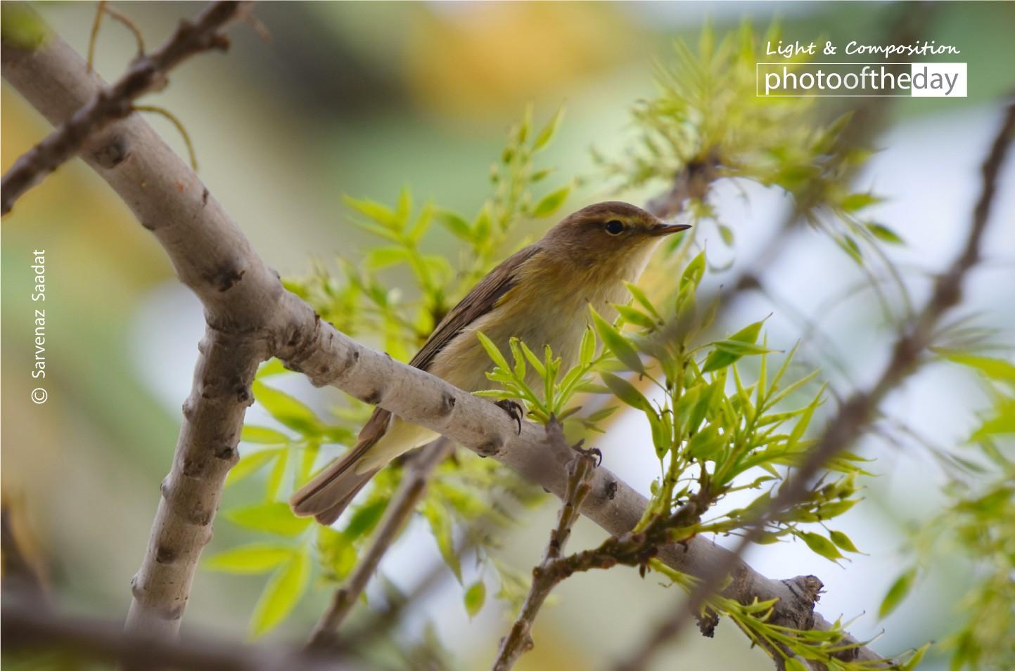 A Brave Bird by Sarvenaz Saadat