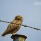 Injured Owl by Sarvenaz Saadat