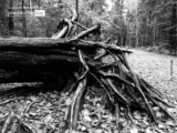 Roots by Anna Cicala