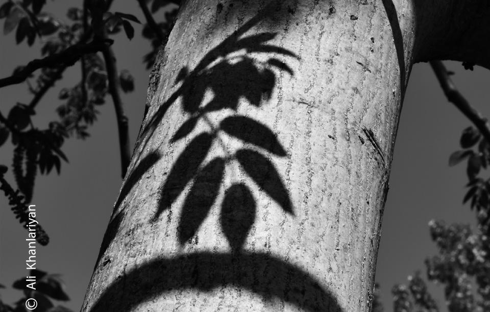 Shadows by Ali Khanlariyan