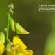 A Flower in Arecibo's Spring by Jose Juniel Rivera-Negron